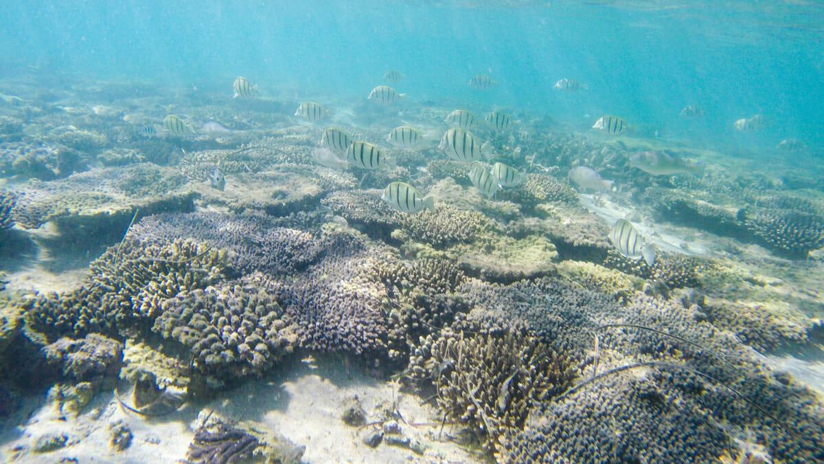 snorkelling ouest australie