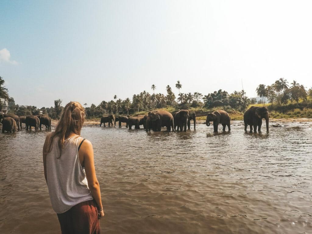 Voyage elephant sri lanka