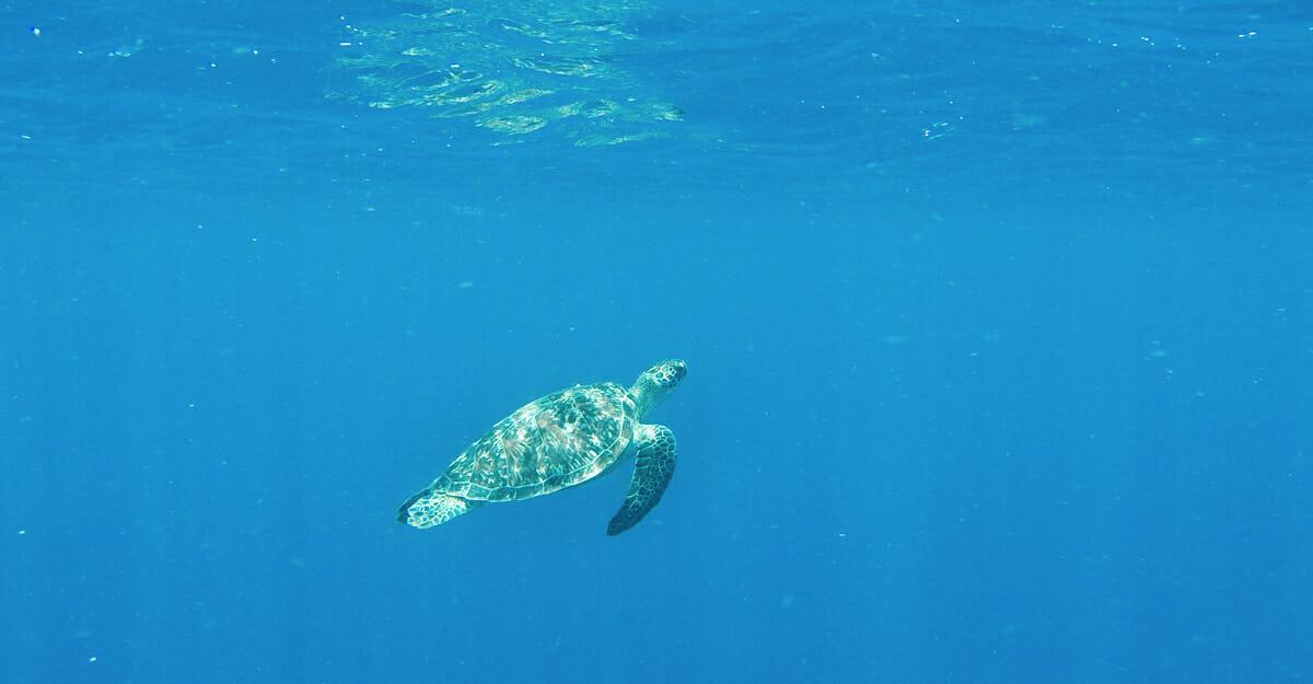 Gili Air snorkelling