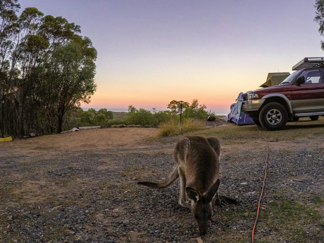 Helpx australie camping