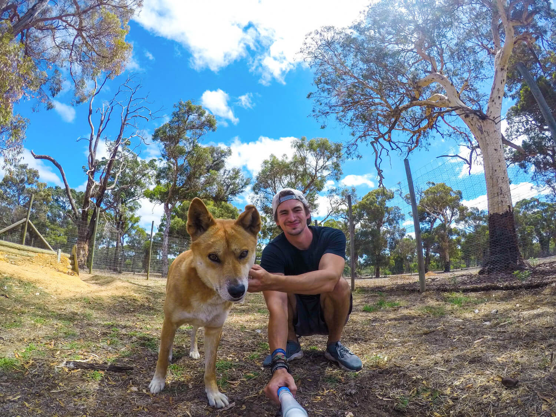 helpx australie dingo
