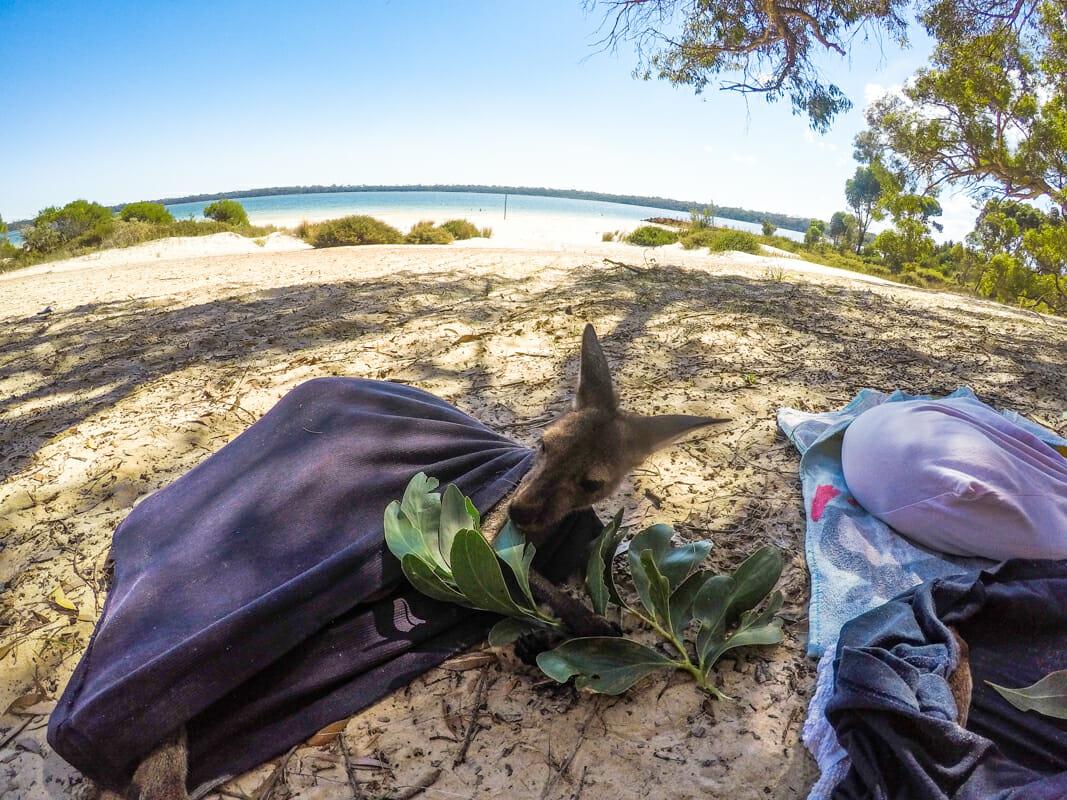 helpx australie Lola plage