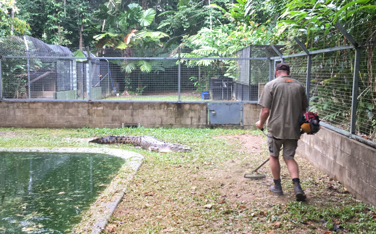 Trouver du travail en australie crocodile