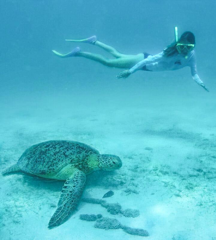 îles perhentian malaisie tortue