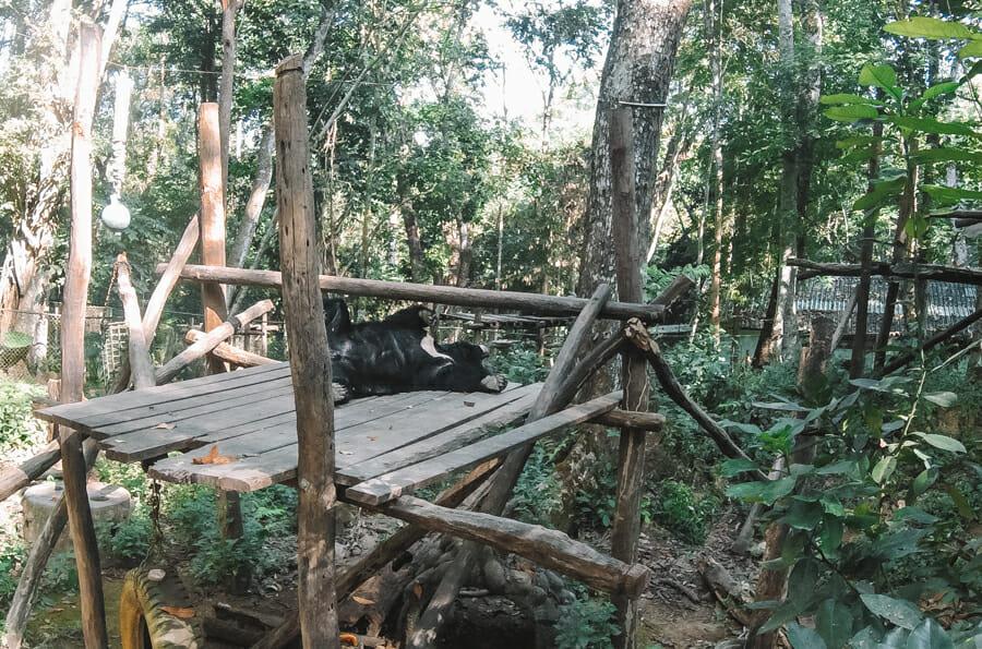 visiter Luang Prabang kuang si falls