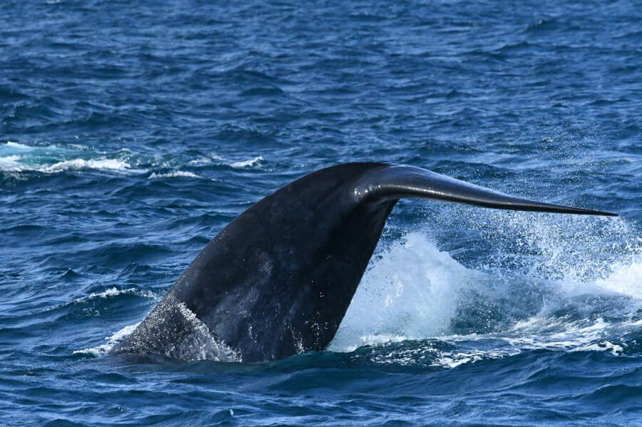 itineraire sri lanka baleine mirissa