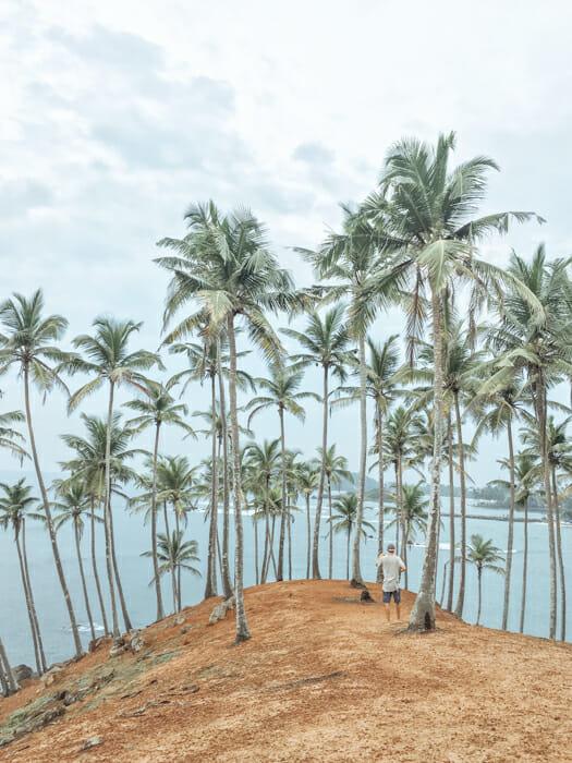 itineraire sri lanka coconot tree hill mirissa
