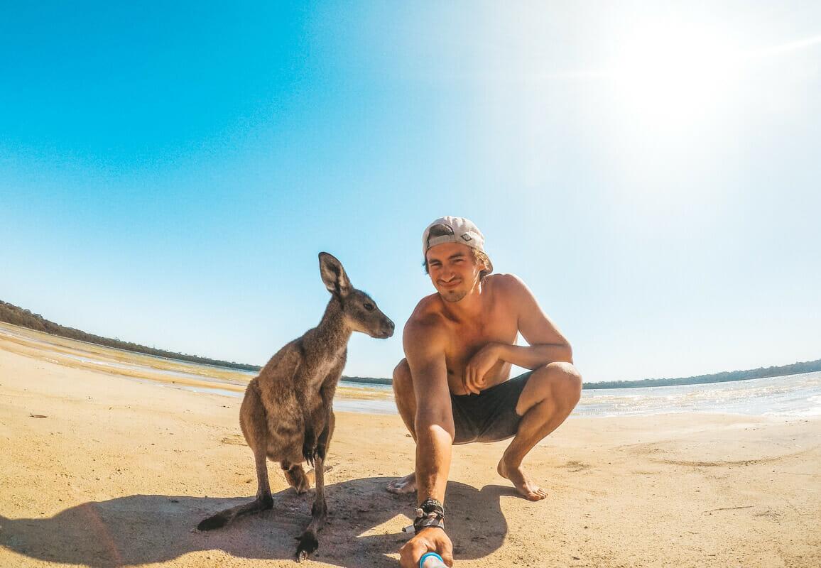 helpx-australie-kangourou