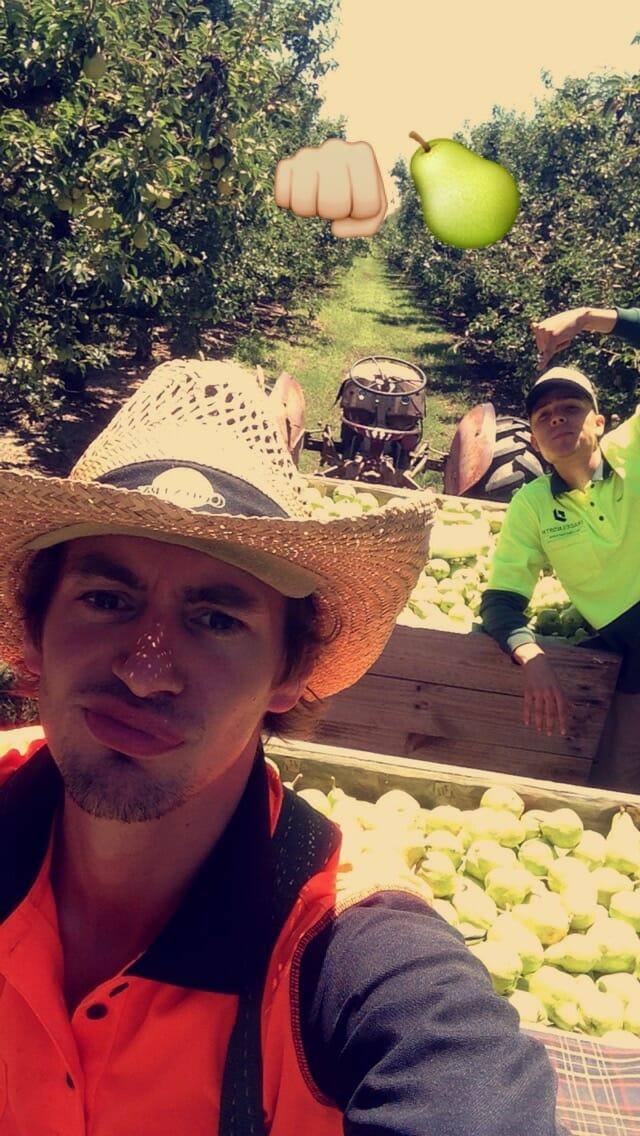 Ftruitpicking travail australie