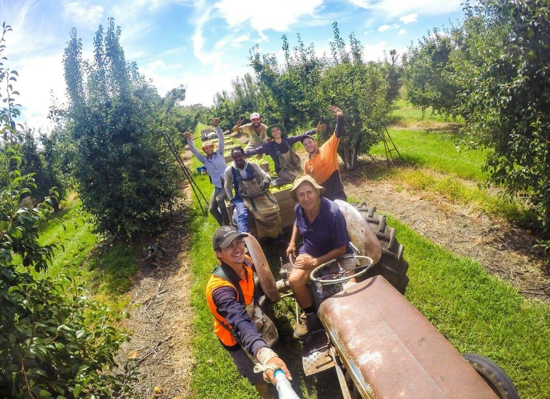 fruit picking australie ferme recolte fruit