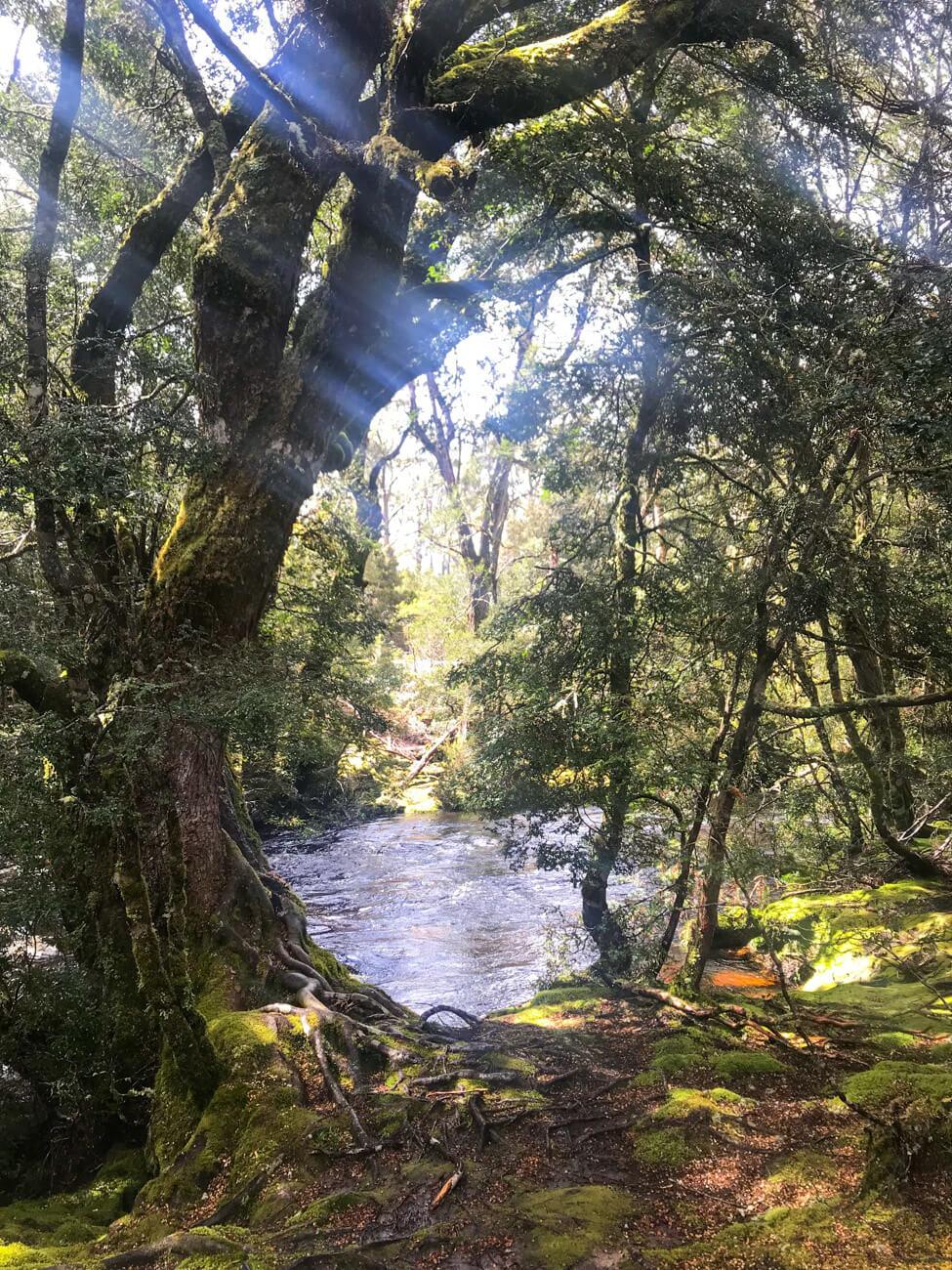 cradle mountain tasmanie parc national (1)